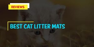 Top 10 Best Cat Litter Mats in 2018 Reviews