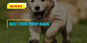 Top 8 Best Dog Poop Bags For Everyday Use In 2020 Review