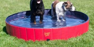 Top 10 Best Dog Pools To Have In 2020 Review & Guides