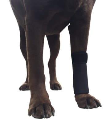 Labra Co. Dog Canine Front Leg Compression Brace Wrap