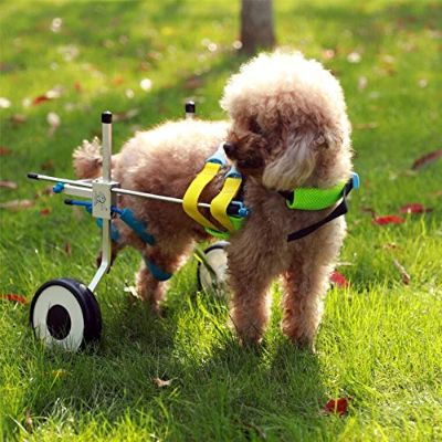 HiHydro 6 Types Cart Pet Wheelchair for Handicapped Hind Legs Small Dog Cat:Doggie:Puppy Walk