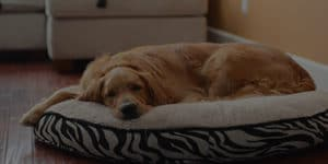 The 12 Best Dog Beds Of All Time